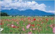 1.自然環境の保全及び景観の維持・再生に関すること