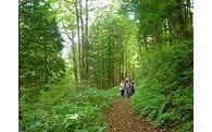 (6)森の中で、心も体も元気になれる癒しのまちづくり