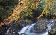 (1)豊かな自然環境を守る事業