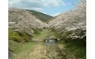 1.桜と源氏ボタルの保全プロジェクト  目標金額 150,000円