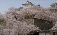 3.桜あふれる津山城整備事業