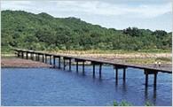 分野1.こうちの「山」「川」「海」の環境を守り育てる