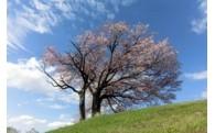 事業4 ふるさとの自然環境の保全に関する事業