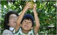 (2)安全安心な食と農の推進