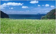 自然及び環境の保全に関する事業