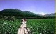 九重町の自然保護・保全事業