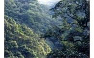1 綾町の照葉樹林とユネスコエコパーク推進のための事業