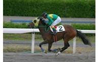 2.強い競走馬づくりに関する事業