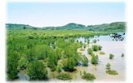 1.自然環境の保全に関する事業