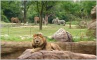 都心のオアシスである天王寺動物園の充実に!【動物園の充実】
