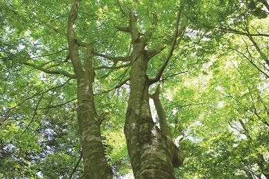 森林資源の循環活用
