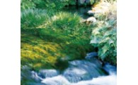 「ふるさとくまもとづくり応援分」環境の保全・再生