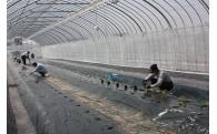 1.「農」税で農家支援事業