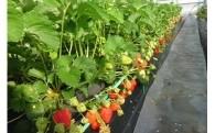 18.農業振興のため