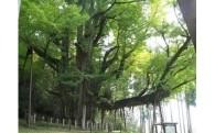 (1)環境