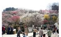 梅の里の再生・復興に関する事業