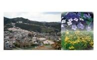 4.「日本一桜の種類の多い公園」整備事業