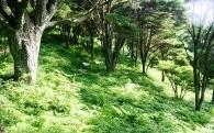 天然記念物ウツクシマツの保全に関する事業
