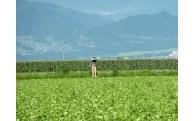 (4)農業・産業振興づくりに関する事業