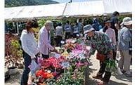 005 商工、農林及び園芸の振興