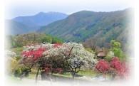 (3)美しく豊かな自然環境と魅力的な景観づくり