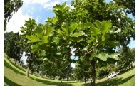 (7)自然環境・地域景観の保全に関する事業