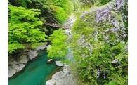 (1)観光資源の維持、景観の保全及び整備に関する事業