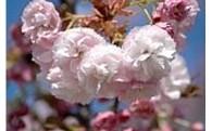 日本国花苑の整備及び充実に関する事業