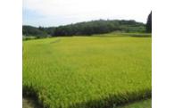ふるさと農業振興事業