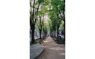 街路樹シンボルロード保全