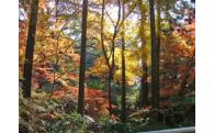 17.六甲山の森の手入れ