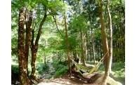 (7)環境を守る森づくりに関する事業