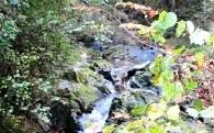 ・ 自然環境の保全に関する事業