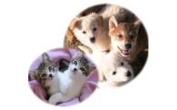 子犬子猫の飼い主捜し応援プロジェクト
