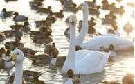 ③【生活環境】美しい自然と豊かな暮らしを引き継ぐまちづくり