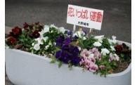 花いっぱい運動 花苗購入