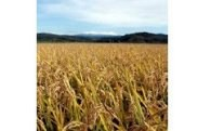 1. 安全・安心な農産物の生産供給等農業振興に関する事業