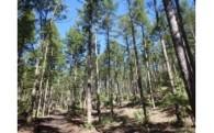 ・町有林野の育成と振興に関する事業