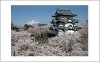 1. 日本一の「さくら」応援コース