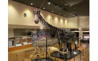 丹波竜【恐竜化石】の振興
