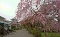 桜の名所「城山公園」整備コース