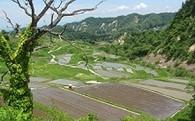 (3)環境や景観の保全への活用