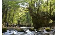 自然、環境の保全に関する事業
