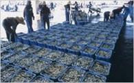 6.漁業や観光などの地場産業の振興に関する事業