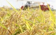 ⑤農業振興や観光などの地場産業に関する事業