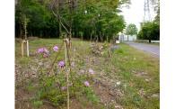 1.自然環境及び地域景観の保全に関する事業