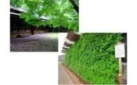 (3)富里の原風景や自然環境を継承するための事業
