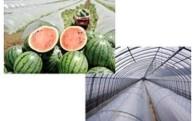 (2)食の安全と農業を振興するための事業