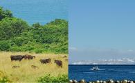 2. 「基幹産業の確立と創造性あるまちづくり」のための農林漁業応援事業