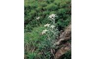 """3 全国で数少ない、名前に""""花""""がつく自治体として、豊かな自然を未来に引き継ぎ、花と緑で花巻を彩りたい。"""